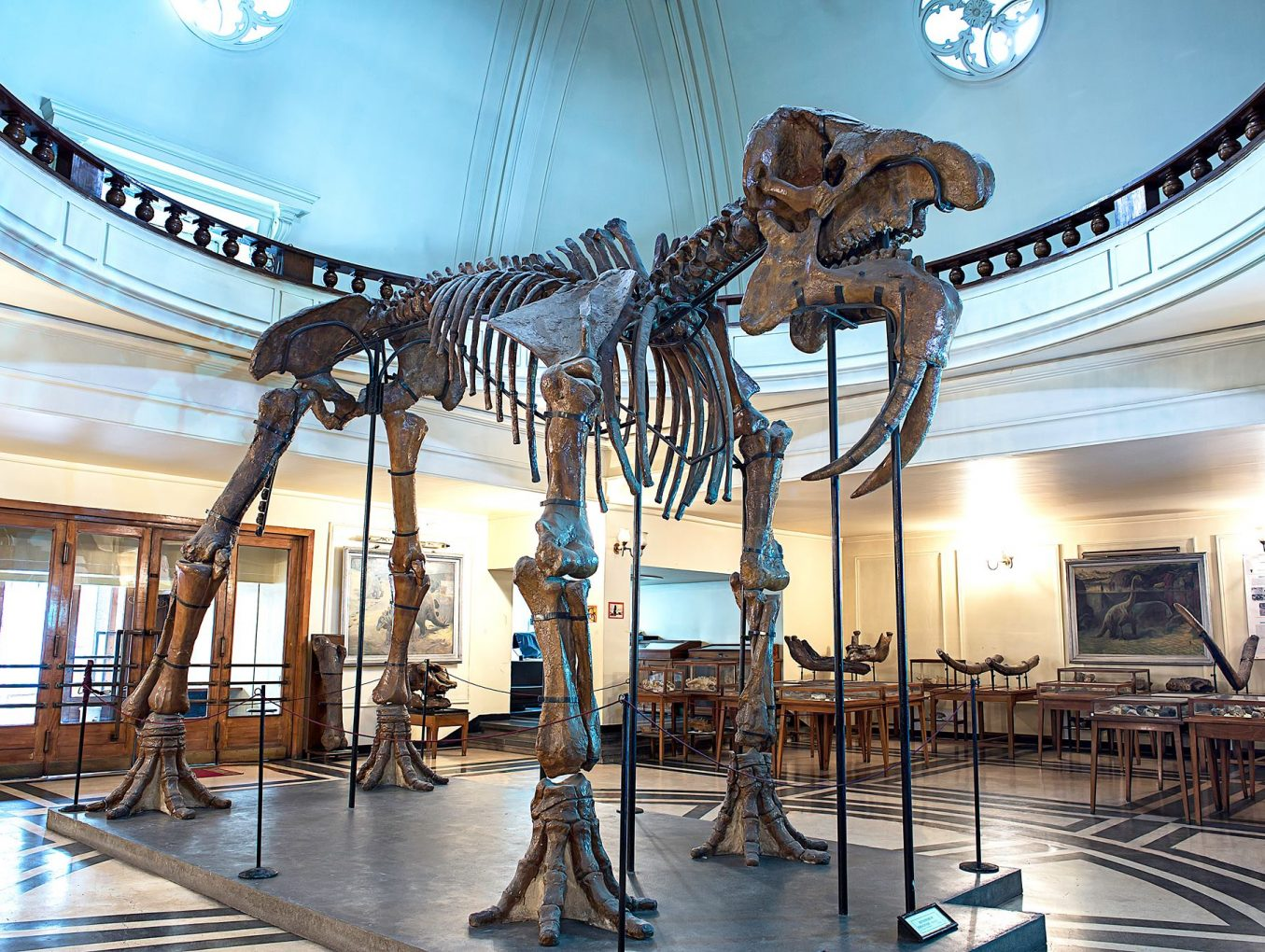 The Unknown Sofia: Paleontological Museum at Sofia University